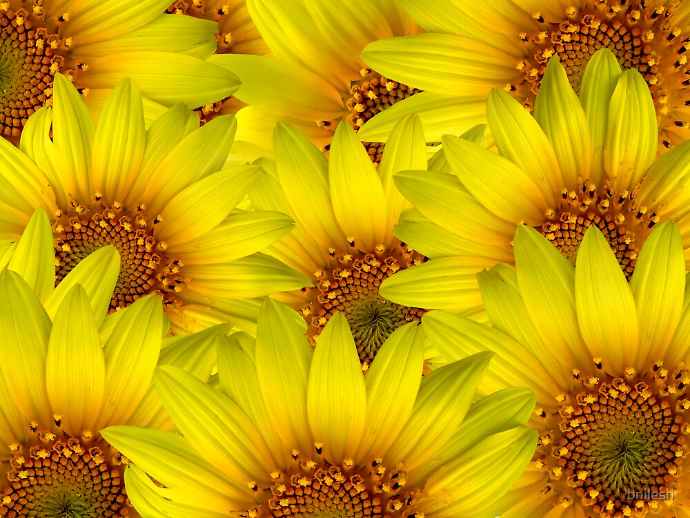 Sunflower Background  by bnilesh