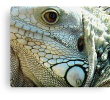 IGUANA EYES Canvas Print