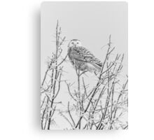 Snowy Owl 2014 4 Black and White Canvas Print