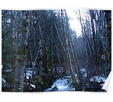 Clausen Creek through the woods Poster