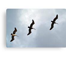Three Wise Birds Canvas Print