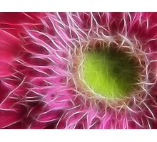 Pink Gerbera Abstract Photographic Print