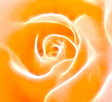 Glowing Rose by bnilesh