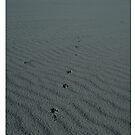 Dingo Footprints  by Rob  McDonald
