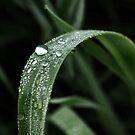 When It Rains... by BluAlien