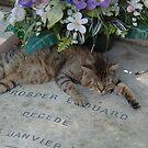 03 - CEMETERY CAT, MONTPARNASSE, PARIS (D.E. 2005) by BLYTHPHOTO