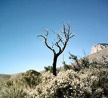 Dead Tree, Blue Sky by boopfto