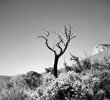 Dead Tree, Blue Sky in Black & White by boopfto