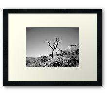 Dead Tree, Blue Sky in Black & White Framed Print
