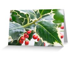 Christmas Holly Greeting Card Greeting Card