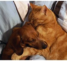 Brownie and Simba by Lauren O