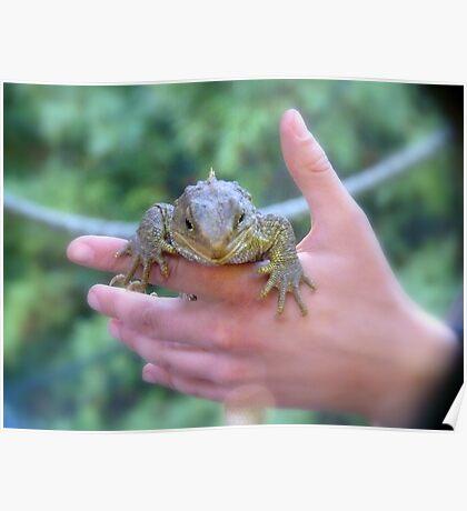 Be Gentle... I'm Protected...Tuatara - lizard - NZ Poster