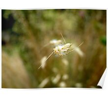 The Hull Of Grasses - Ornamental Grass Seeds - NZ Poster