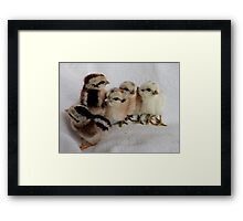 We Are The New Roodles - Chicks - NZ Framed Print
