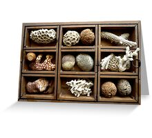 Corals, fossils, seeds and stones Greeting Card