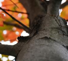 Autumn in New England Sticker