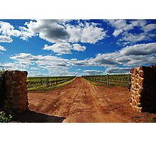Vineyard # 2  Photographic Print