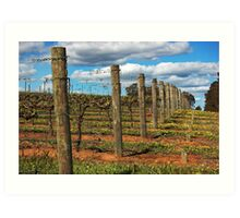 Vineyard # 3 Art Print
