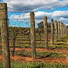 Vineyard # 3 by Eve Parry