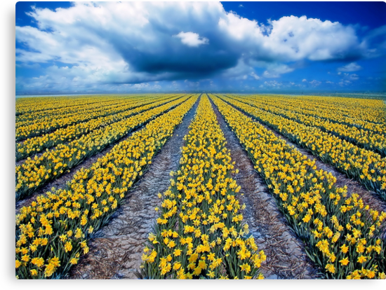 Spring Fields by PhotoDream Art