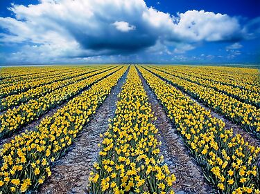 Spring Fields by PhotoDream Art