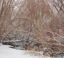 Winter on the Provo River by Sissypius