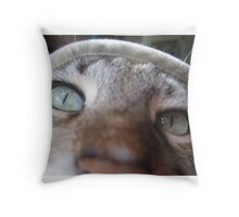 I look at you wistfully Throw Pillow