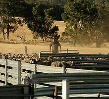sheep farmer by max cooper