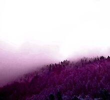 Purple Hill by Jane Tripp