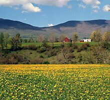 Springtime in Vermont by Judith Winde