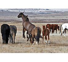 Wild Mustangs of Utah Photographic Print
