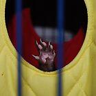 Vive la Ferret! by JVBurnett