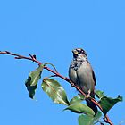 Sparrow in a Tree by Debbie Sickler
