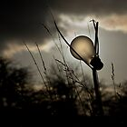 Electric Lighting by Martyn Robertshaw
