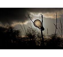 Electric Lighting Photographic Print