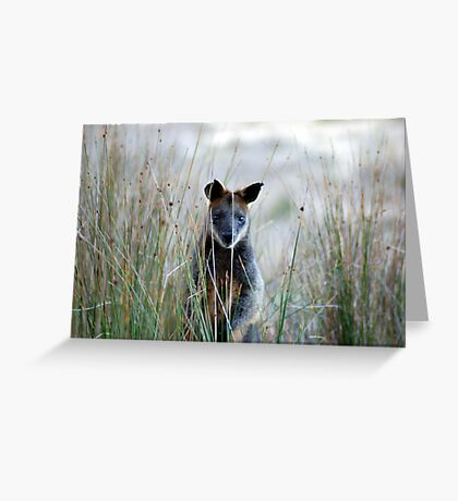 Swamp Wallaby - Australia  Greeting Card