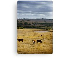 Typical Australian Terrain Canvas Print