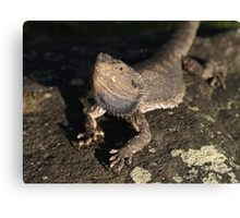 Don't mess with me - Eastern Bearded Dragon Canvas Print