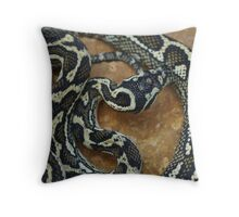 Port Macquarie Carpet Python Throw Pillow