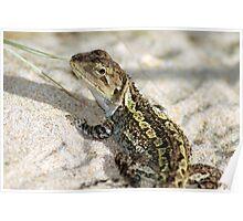 Wonderful Jacky Lizard - Australia Poster