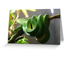 Green Boy Greeting Card
