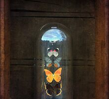 Butterflies in a Glass Bell Jar by StrangeStore