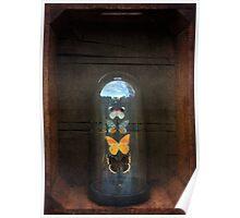Butterflies in a Glass Bell Jar Poster