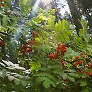 berry sunny by Jena Ferguson