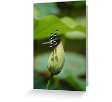 Wing Shadows Greeting Card