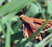 Skipper in the Grass by Debbie Sickler