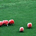 pink sheep by davey lennox