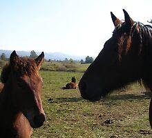 WILD HORSES  by SofiaYoushi