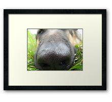 DOG NOSE  Framed Print