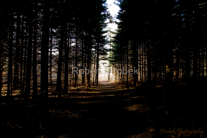 In the forest by Robert Drobek